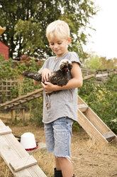 Boy holding Polish chicken at chickenhouse in garden - MFRF01261