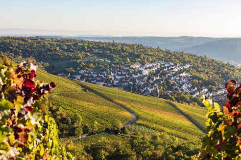 Germany, Baden-Wuerttemberg, Stuttgart, view over grapevines to Uhlbach - WDF05181