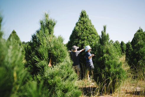 Boys standing by Christmas tree in farm against sky - CAVF62228