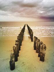 Belgium, Flanders, North Sea, wooden groynes - GWF05918