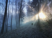 Germany, Rhineland Palatinate, Palatinate Forest, man walking and relaxing in foggy forest with sunbeams - GWF05933