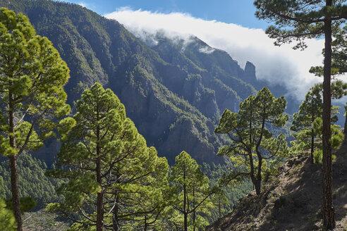Spain, Canary Islands, La Palma, - BSCF00600