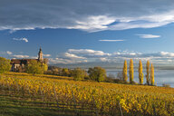 Germany, Baden-Wuerttemberg, Birnau, Birnau Basilica, vineyard and Alps in golden october - SH02056