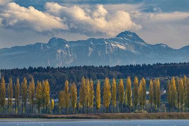 Deutschland, Baden-Wuerttemberg, Hegne, Dammstrasse Reichenau with poplars in autumn, Alps in the background - SH02083