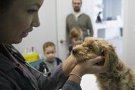 Veterinarian examining dog in clinic examination room - HEROF27092