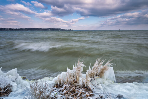 Germany, Baden-Wuerttemberg, Lake Constance, Constance, frozen shore vegetation and clouds in icy easter wind - SH02093