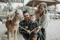 Cute surprised son looking at goat with parents at farm - CAVF62823
