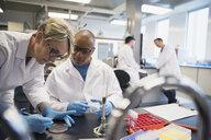Scientists conducting scientific experiment in laboratory - HEROF27729