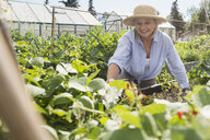 Smiling senior woman tending vegetable garden - HEROF28405