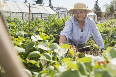 Smiling senior woman tending vegetable garden - HEROF28405