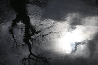 Reflection of bare tree on water surface - JTF01193
