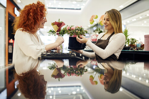 Happy customer and shop assistant with potted plant at counter in flower shop - ZEDF01988