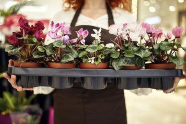 Close-up of florist holding tray of potted plants in flower shop - ZEDF02000