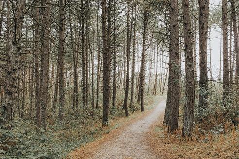 Netherlands, Schiermonnikoog, path through the forest - DWF00343