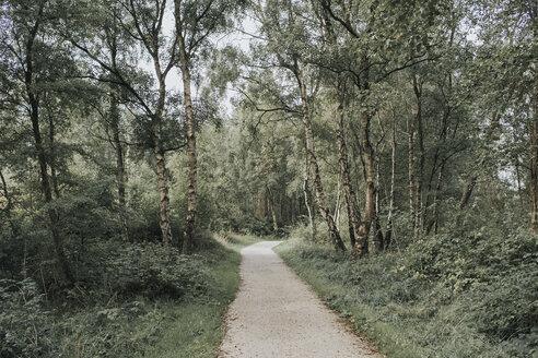 Netherlands, Schiermonnikoog, path through the forest - DWF00346