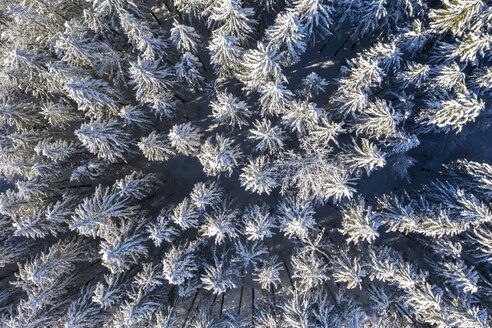 Germany, Upper Bavaria, Dietramaszell, Aerial view of pine forest in winter - LHF00609