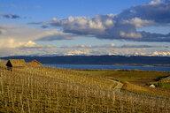 Switzerland, Swiss plateau, Waadt, Bonvillars, - LBF02424