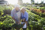 Portrait grandparents and granddaughter in sunny vegetable garden - HEROF28763