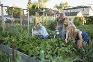 Multi-generation family tending to vegetable garden - HEROF28769