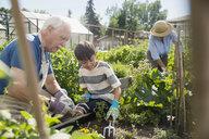 Grandfather and grandson tending to vegetable garden - HEROF28847
