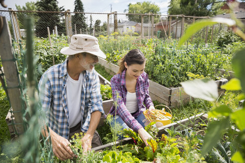 Father and daughter tending to vegetable garden - HEROF28853
