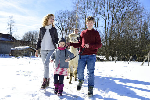 Family walking with alpaca on a field in winter - ECPF00558