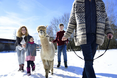 Family walking with alpaca on a field in winter - ECPF00561