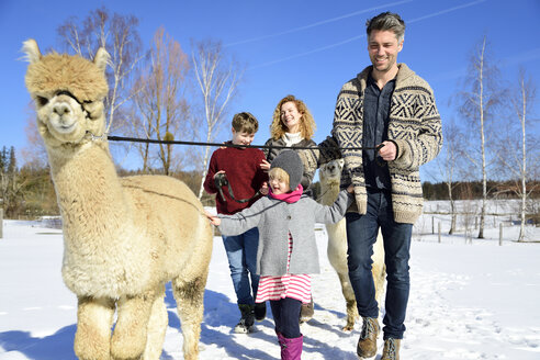 Family walking with alpaca on a field in winter - ECPF00564