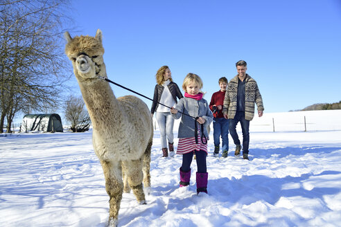 Family walking with alpaca on a field in winter - ECPF00567