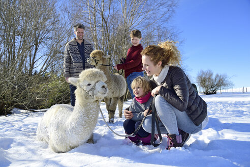 Family with alpacas on a field in winter - ECPF00570