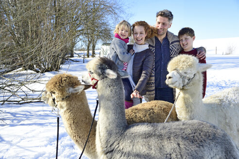 Family with alpacas on a field in winter - ECPF00573