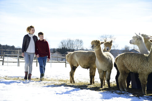 Mother and son walking on a field with alpacas in winter - ECPF00576