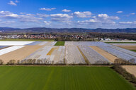 Germany, Hesse, Bergstrasse, Aerial view of asparagus field with white plane - AMF06864