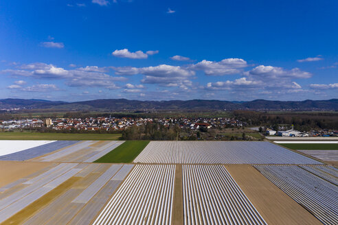 Germany, Hesse, Aerial view of asparagus field with white plane - AMF06867