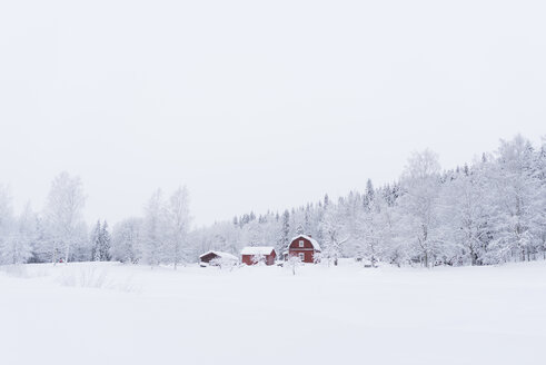 Finland, Kuopio, farmhouse in winter landscape - PSIF00252