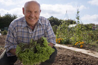 Senior man in checked shirt holding fresh leaf vegetable in garden, crouching, smiling, portrait - JUIF00047