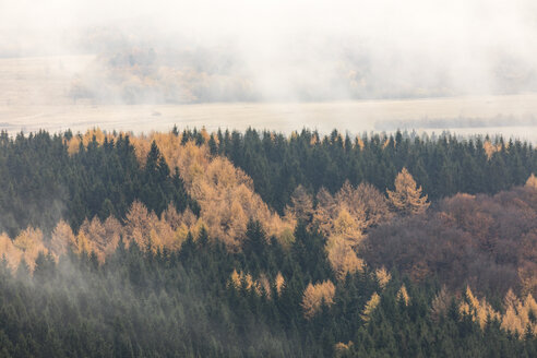 Germany, Hessian Rhoen Nature Park, autumn fog on the Wasserkuppe - SRF00894