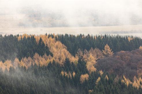 Herbstnebel auf der Wasserkuppe, Naturpark Hessische Rhön, Hessen, Deutschland, Europa - SRF00894
