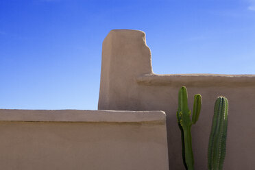 Morocco, succulent plant in front of loam wall - PSTF00388