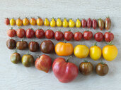 Variety of multicolor organic heirloom tomatoes in a row - HEROF31721