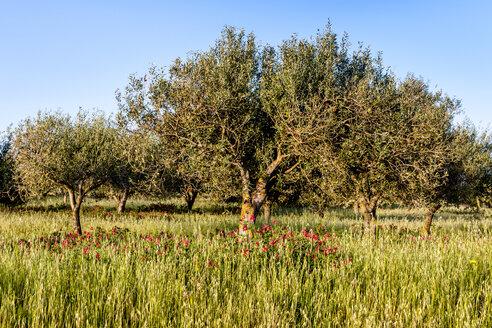 Italy, Sardinia, meadow with trees - EGBF00267