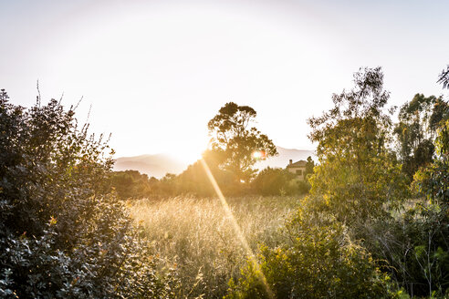 Italy, Sardinia, meadow in sunset - EGBF00279