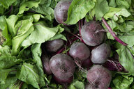 Beetroots on market - CRF02847