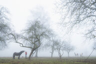 Girl with dog and donkey on foggy rural farm - FSIF03829