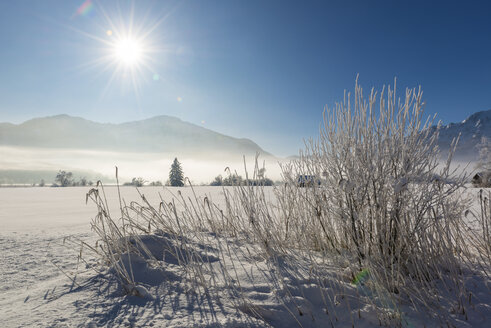 Germany, Upper Bavaria, Werdenfelser Land, Kochel, winter landscape, reed grass against the sun - LHF00624