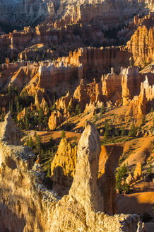 USA, Utah, Bryce Canyon National Park, sandstone formations in the evening light - RUNF01659