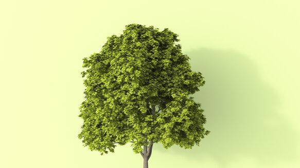 3D rendering, Lush tree in summer - UWF01550