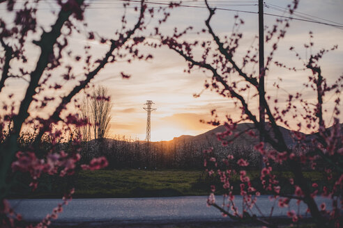 Spain, Lleida, sunset at peach blossom - ACPF00504