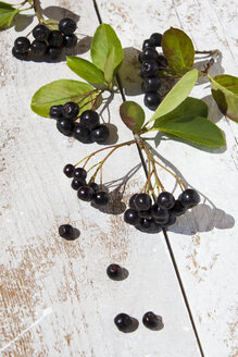 Aronia berrie on white wood, close up - CSF29333