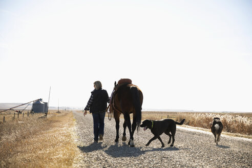 Woman with dogs walking horse on sunny rural gravel road - HEROF33694